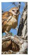 Fluffed Up Barn Owl Owlet Beach Towel