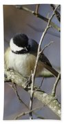 Fluffy Chickadee Beach Towel