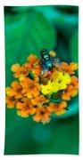 Fly On Flower Beach Sheet