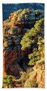 Flying Buttress 06-045 Beach Towel