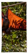 Flying Foxes Beach Towel