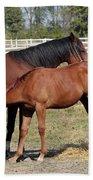 Foal Feeding With Milk Ranch Scene Beach Towel