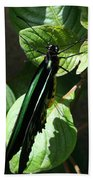 Folded Up - Green And Black Butterfly Beach Towel