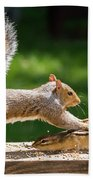 Food Fight Squirrel And Chipmunk Beach Towel