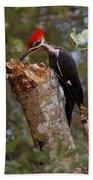 Foraging Pileated Woodpecker Beach Towel