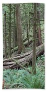 Forest And Ferns Beach Towel