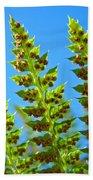 Forest Ferns Art Prints Blue Sky Botanical Baslee Troutman Beach Towel