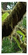 Forest Ferns Art Prints Fern Giclee Prints Baslee Troutman Beach Towel