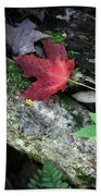 Forest Floor In Autumn Beach Towel