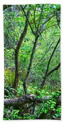 Forest In Hdr Beach Towel