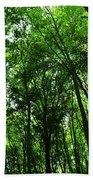 Forest Beach Sheet
