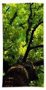 Forest Top Beach Towel