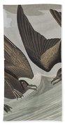 Fork-tail Petrel Beach Towel