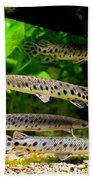Four Aquarium Fishes In Zoo Beach Towel