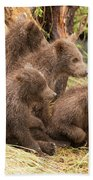 Four Bear Cubs Looking In Same Direction Beach Towel