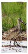 Four Marbled Godwits Beach Sheet
