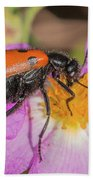 Four-spotted Blister Beetle - Mylabris Quadripunctata Beach Towel