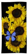 Four Sunflowers And Blue Butterfly Beach Towel