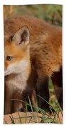 Fox Cubs Playing Beach Towel by William Jobes
