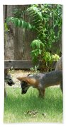 Fox Family Beach Towel by Deleas Kilgore