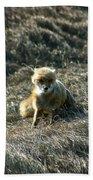 Fox In The Wind Beach Sheet