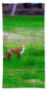 Fox Of Boulder County Beach Towel