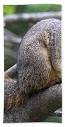 Fox Squirrel On A Branch - Southern Indiana Beach Towel