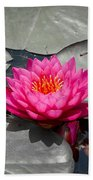 Fragrant Water Lily Beach Towel