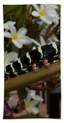 Frangipani Tree And Caterpillar Beach Towel