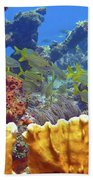 French Reef 1 Beach Towel