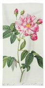 French Rose Beach Towel by Pierre Joseph Redoute