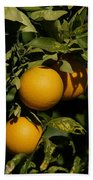 Fresh Oranges Beach Towel