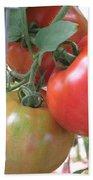 Fresh Tomatoes Ahead Beach Towel