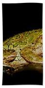 Cuban Tree Frog Beach Towel