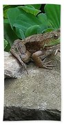 Frog On A Rock Beach Towel