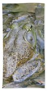 Frogs Eye View Beach Towel