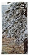 Frost-covered Pine Beach Towel