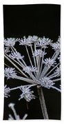 Frosted Hogweed Beach Towel