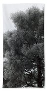 Frosted Pine Beach Towel