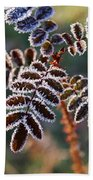 Frosty Rose Leaves Beach Towel