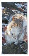 Frosty Squirrel Beach Towel