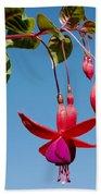 Fuchsia At Pilgrim Place In Claremont-california Beach Towel