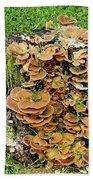 Fungus Bouquet Beach Towel
