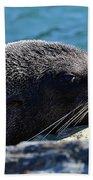 Fur Seal Beach Towel
