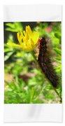 Furry Caterpillar On A Yellow Flower Beach Towel