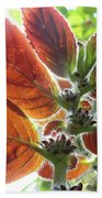Furry Flora 2 Beach Towel