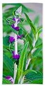 Salvia At Pilgrim Place In Claremont-california  Beach Towel