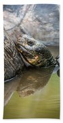Galapagos Giant Tortoise In Pond Amongst Others Beach Towel