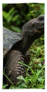 Galapagos Giant Tortoise In Profile In Woods Beach Towel