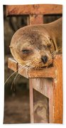 Galapagos Sea Lion Sleeping On Wooden Bench Beach Towel